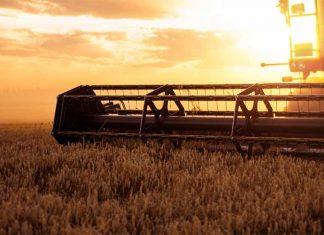 cosechadora campo