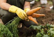como cultivar en tu casa